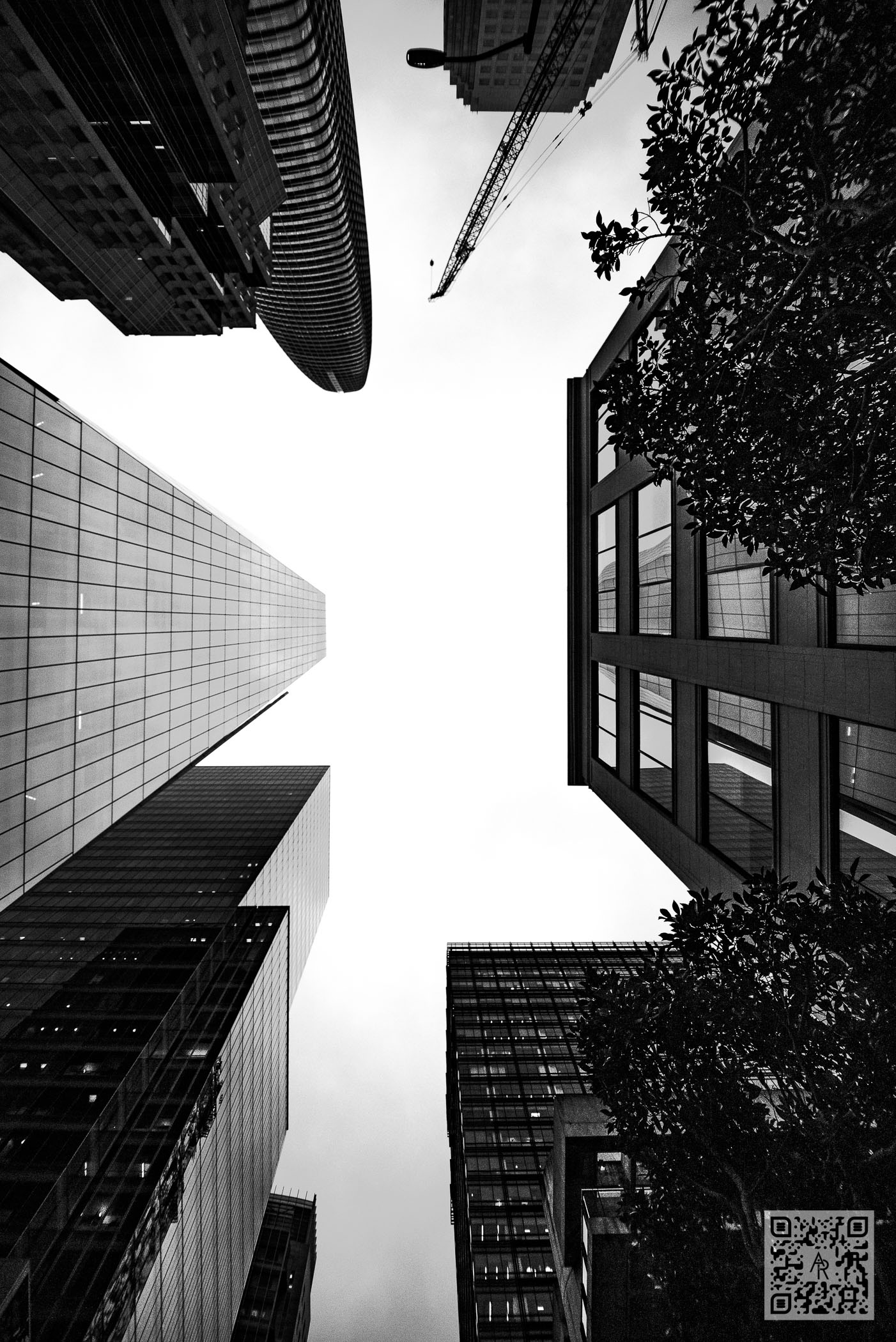 Looking Up in San Francisco
